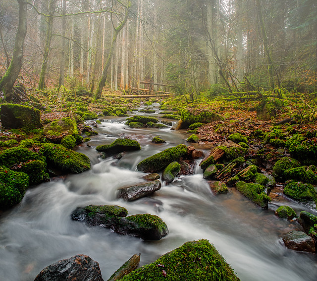 Naturfotografie - Stefan Betz - Black Forest Revisited