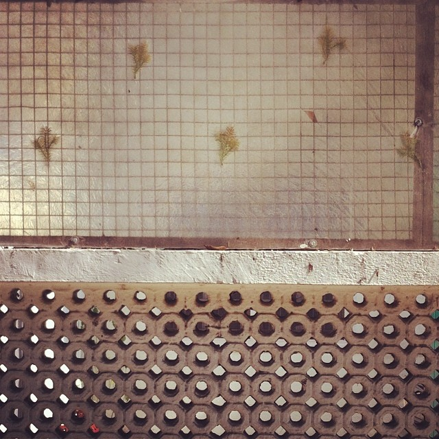 Good fences make good neighbors #delhi #outforawalk #india