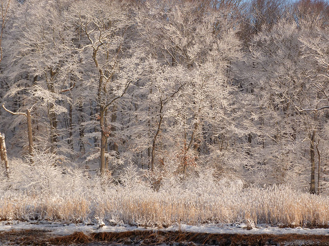 winter_river4