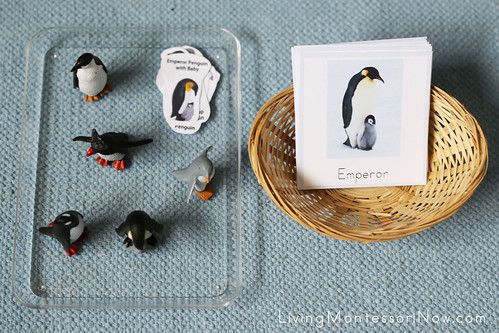 Materials for Antarctica Penguins and Their Chicks Activity
