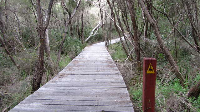 Day 35: Boardwalk near Northcliffe
