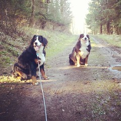 Another one from our morning walk. Azzie attached to her line as she was in spazzington mode.