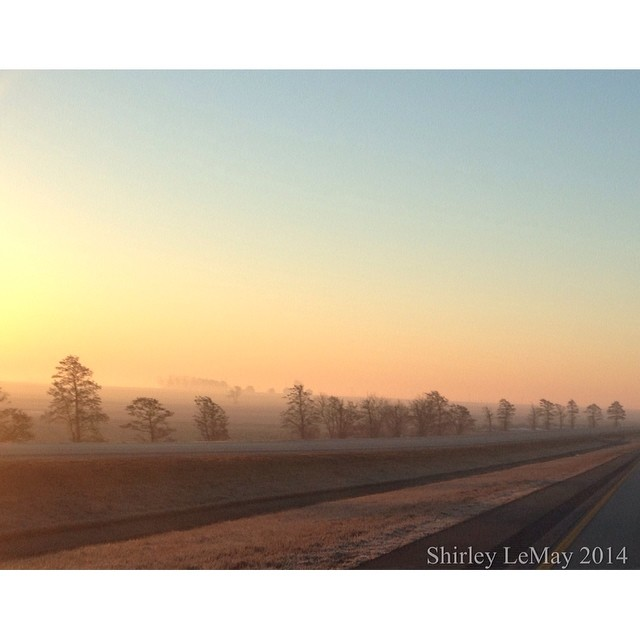 Shrouded #fog #goodmorning #squaready #road #sunrise