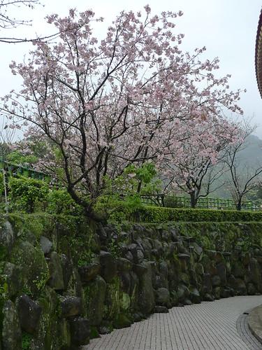 20140309-台北天元宮 (118)