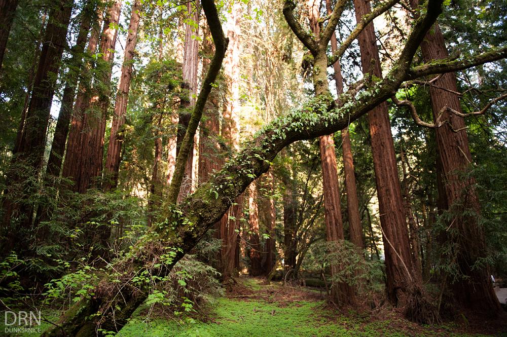 Muir Woods - 03.23.14