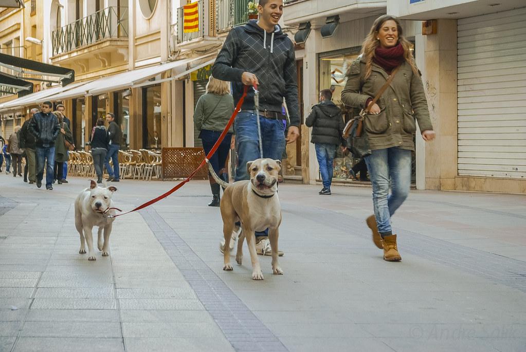 Lovely street scene! собака - улыбака!