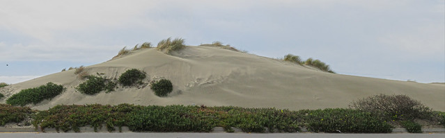 Sand dune at Noriega and Great Highway.  San Francisco (2015)