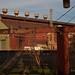Mingo Junction, OH by alison.altman