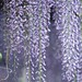Canopy of Wisteria ~ Huron River Watershed by j van cise photos