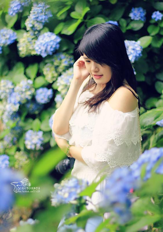 繡球花 (26)