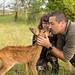 Bambi ! (Gardouch, INRA) 03 juillet 2016 by ÇhґḯṧtÖphε
