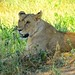 8747480893 7e83acfcd4 s Thomson Safaris Review: We will treasure this trip for a lifetime
