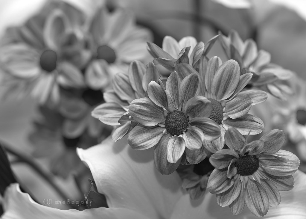 may 28 june 28th assignment stilllife flowers in