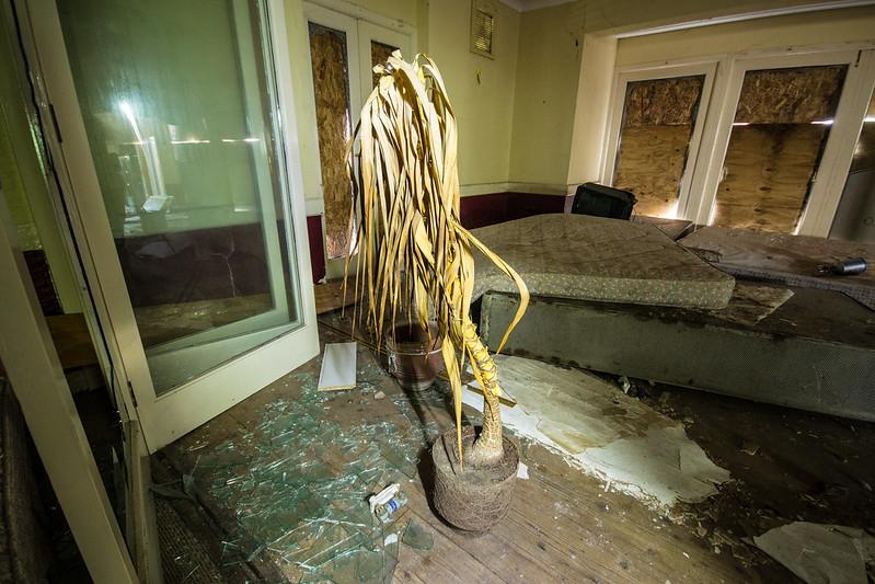 Broads Hotel Dead Plant