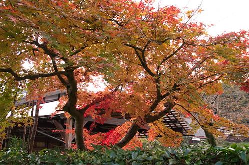【写真】2012 紅葉 : 寂光院/2020-08-29/IMGP6335