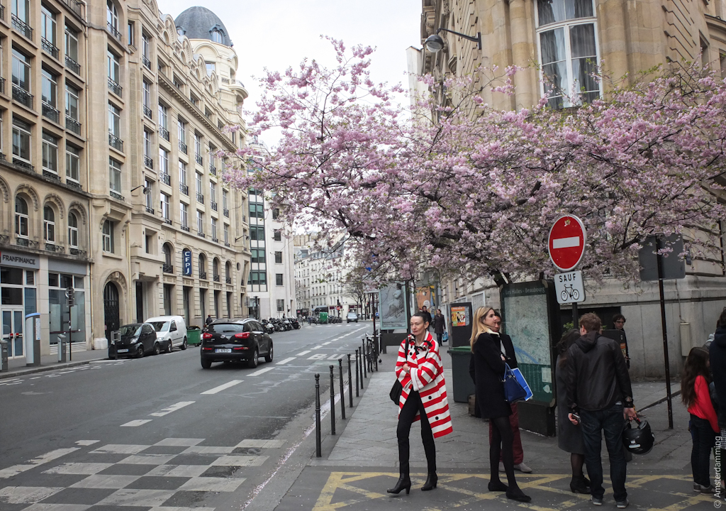 Paris, Street Fashion and Cherry Blossom