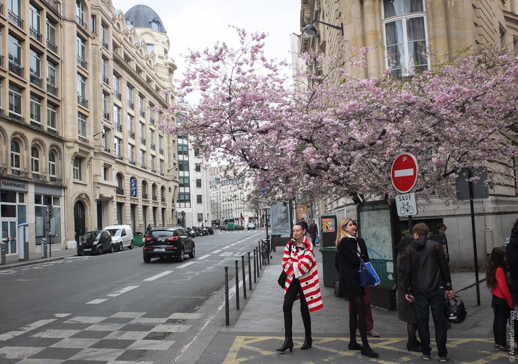 Paris, Street Fashion and Cherry Blossom