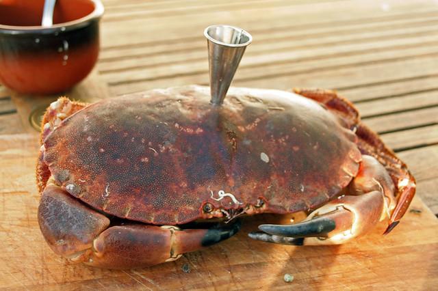 9678820804 c8a7219a4f z Crabe à l'entonnoir de Fred Chesneau
