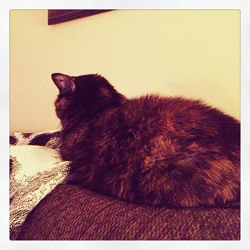 Napping behind me on the couch. #weekinthelife #cat #tortie