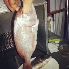 bass(0.0), cod(0.0), tilefish(0.0), jigging(0.0), barramundi(0.0), animal(1.0), fish(1.0), fish(1.0), red snapper(1.0), milkfish(1.0),