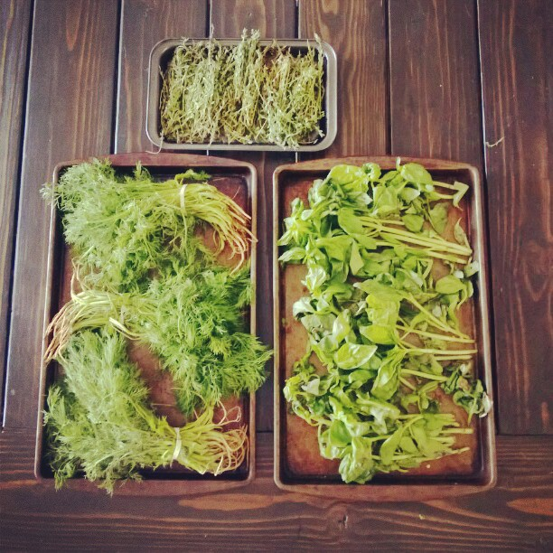 Herb drying.  #garden