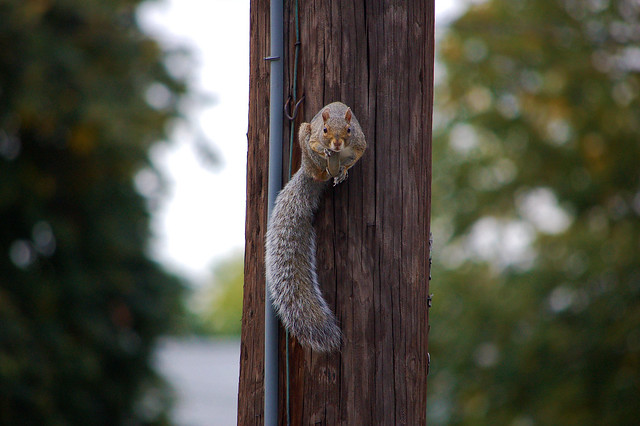 Squirrel Perch