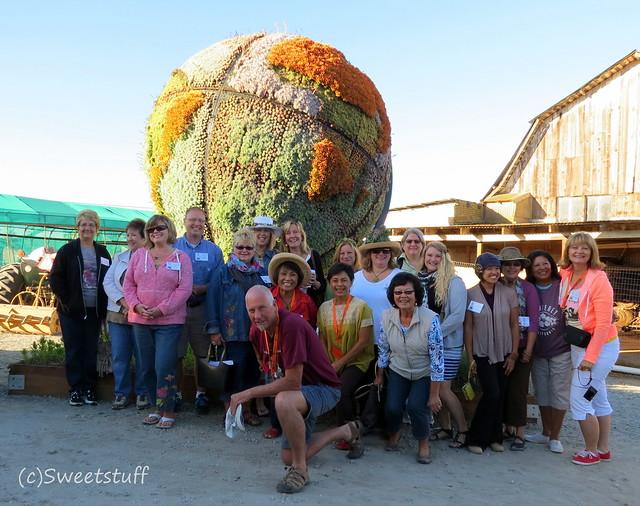 Succulent fanatics and globe