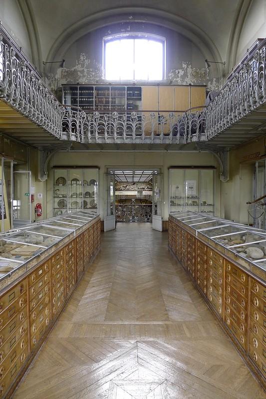 La galerie d'Anatomie comparée et de Paléontologie - Paris
