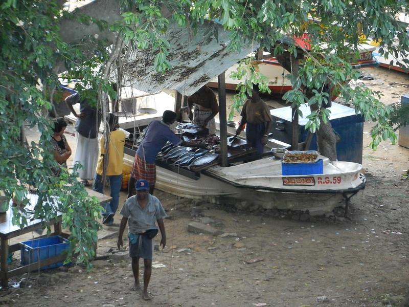 Рыбные рынки Шри Ланки