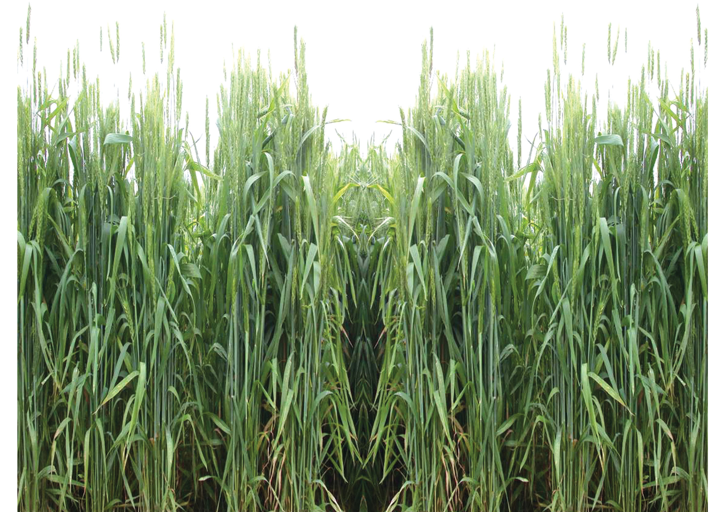 Images of food crops in india. Agriculture in India. 2019 ...