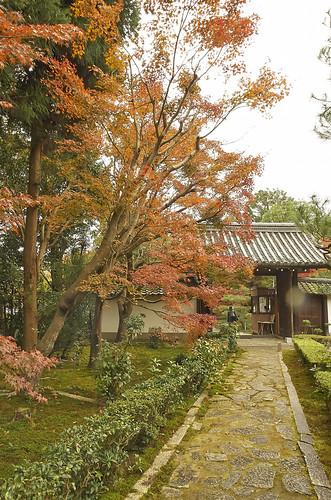 【写真】2013 紅葉 : 即宗院/2021-07-30/IMGP3454