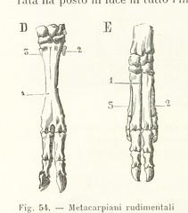 """British Library digitised image from page 146 of """"Antropologia generale. Lezioni su l'uomo secondo la teoria dell'evoluzione ... raccolte e pubblicate ... da G. Raverdino e G. B. Vigo"""""""