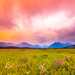 Morning Meadow by Laura Travels