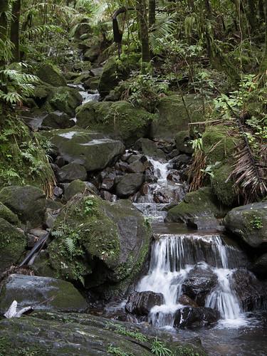 trees naturaleza motion verde green fall nature water canon waterfall agua rainforest puertorico hiking explore motionblur 7d pr elyunque riogrande yunque ríogrande