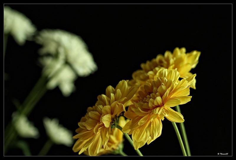 IMAGE: http://farm8.staticflickr.com/7316/11942350433_8b8147c4e2_c.jpg