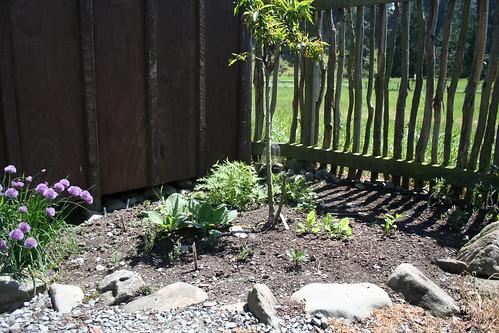 Garden Bed, Hut Corner - 2013-11-14
