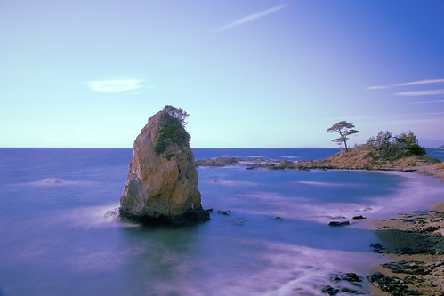 winter sea tree rock japan landscape seaside afternoon seashore kanagawa miurapeninsula standingrock tateishipark