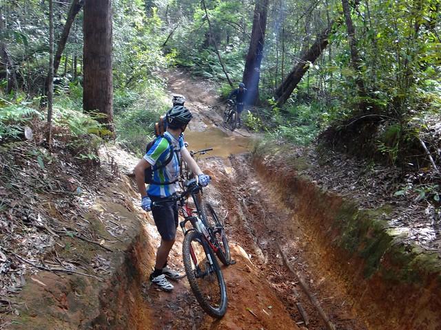 Glasshouse Mountains Trails