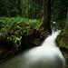 Overflow by Bryn Tassell
