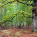 Magic forest by Thomas Frejek
