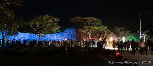 今帰仁グスク桜まつり | Okinawa #11