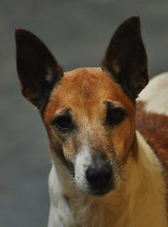 DSC_1110  Eu adotei um cão
