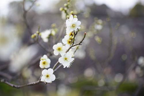 2015.2.11大阪城梅林-25