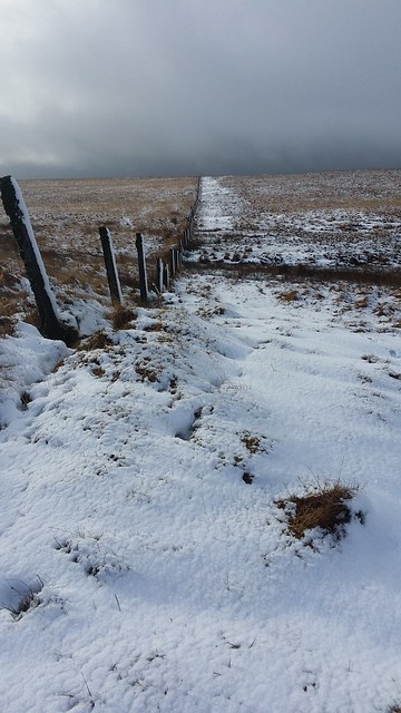 Fence between Black Dunghill and Holming Beam