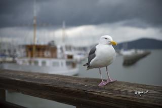 San Francisco, CA - Impressionen | Roland Krinner