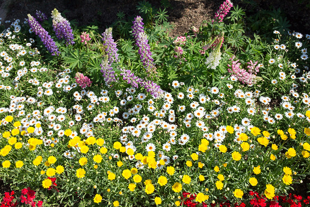 Ashikaga Flower Park 2016