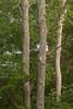 woodland-100.jpg