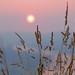 Sunrise through wild grass