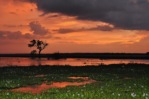 travel blue trees sunset red sea sky cloud lake colour tree water clouds landscape asia purple bright outdoor wetlands serene srilanka ceylon uva grasslands southasia uvaprovince weerawilalake