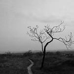 Old tree way